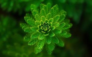 Unser Gehirn liebt Symmetrie und empfindet sie als besonders schön.